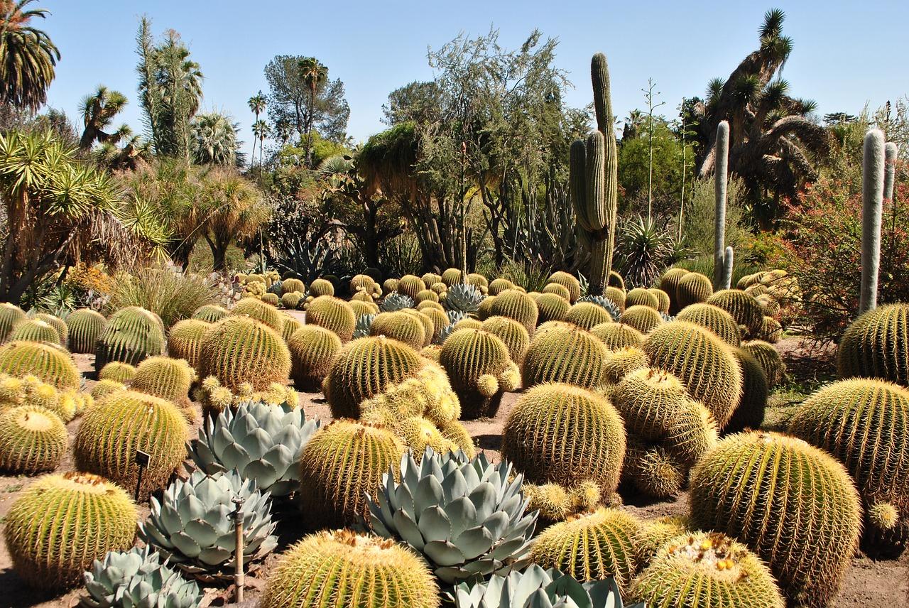 Cacti at Huntington Gardens.
