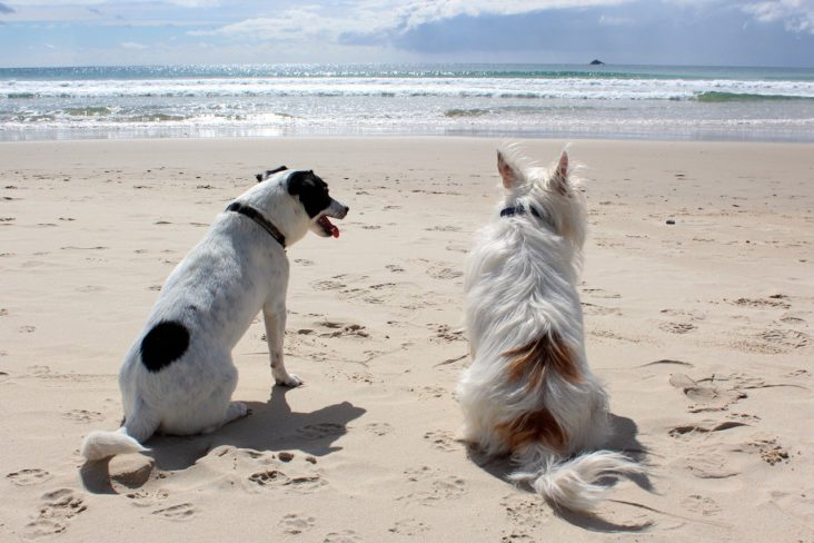 Dogs on a Beach.