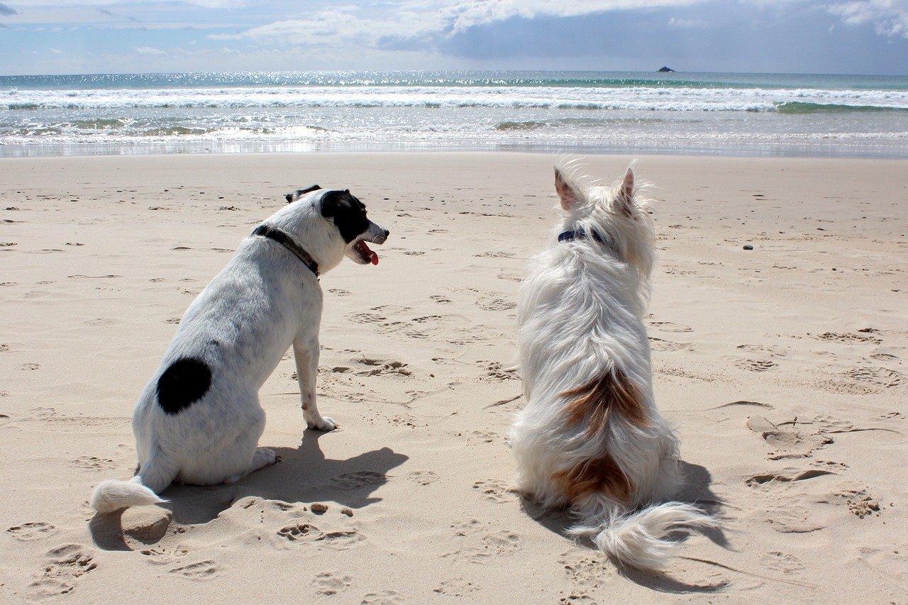 Dogs on a Beach.